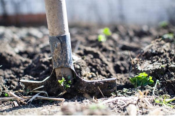 guadagnare giardino